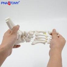 Гибкий ножной костяной модель взрослый размер человеческий скелет