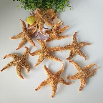 5pcs real sea star Natural Starfish Thorns Sea Starfish Dried Specimens Beidaihe Shell Mediterranean Style Wedding Decoration