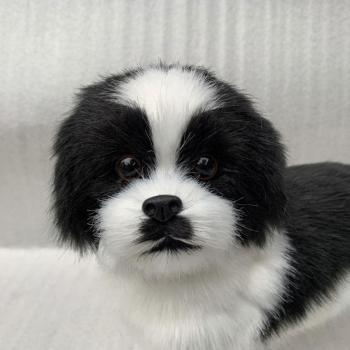 Realistic Black And White Puppy Simulation Toy Dog Companion Lifelike Puppies Stuffed Pet Handmade V6Y2