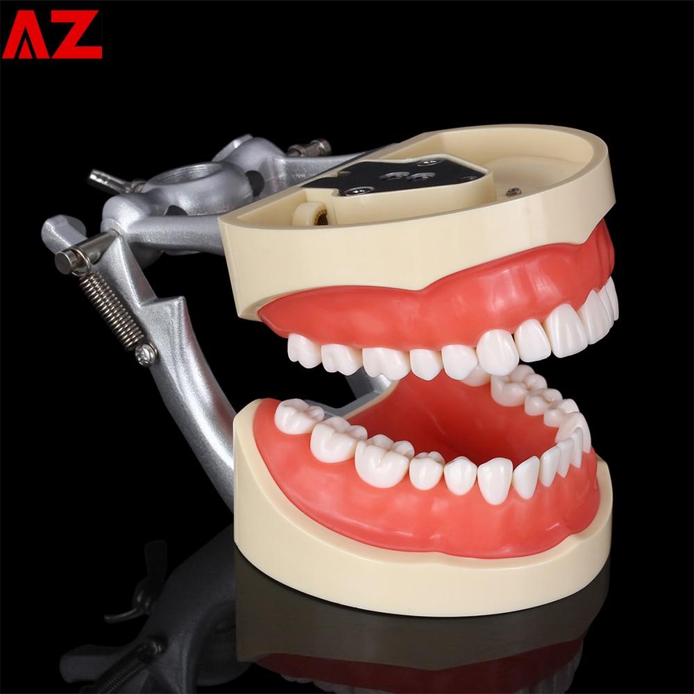 Dental Teaching Model Standard 32 pcs Removable Teeth Dental Dentist Typodont Model Removable Teeth Soft Gum Model for Dentists