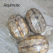 Aqumotic Real Tortoise Shell 1pc about 10cm Sea Turtle Shell