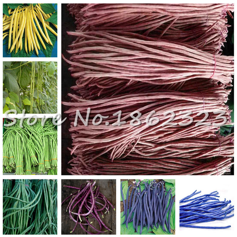 50 Pcs/ Bag Chinese Long Bean Vigna Unguiculata Plant Long-Podded Cowpea Tasty Snake Bean Vegetable Garden Planta For Flower Pot