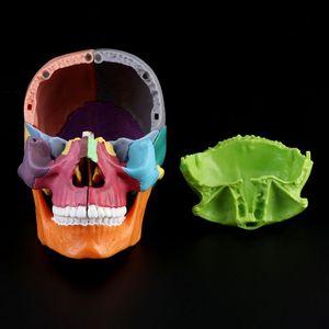 Image 2 - 15 יח\סט 4D מפורק צבע גולגולת אנטומי דגם להסרה הוראה רפואית כלי