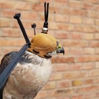 Falconry Eagle Screaming Hood Falcon Hat Eye Mask Helmet Arab Pedal Accipiter Nisus Accipiter Virgatus Affinis Eurasian Kestrel