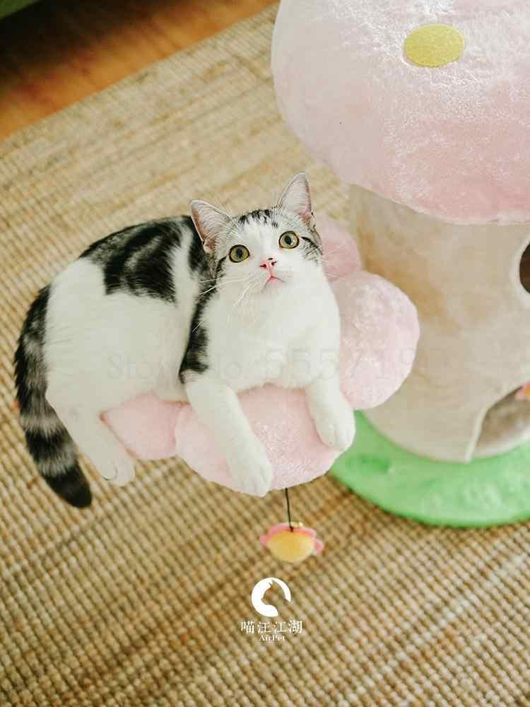 Pilz Pilz kann ICH auch blume Carty Kerry Pilz Blumen Katze klettergerüst Katze fantasie paradise