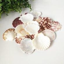 Conchas starfish, conchas marinhas em concha para decoração de casa, babyion, náuticas, decoração para casa e couro cabeludo, 20 peças
