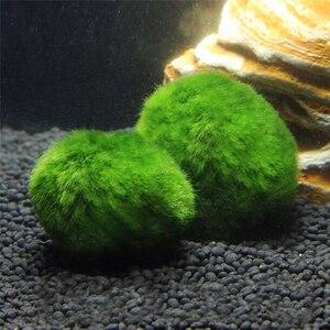 1Pcs Aquatic Aquarium Landscape Real Grass Live Mousse Green Aquarium Ornamental Prospects Grass For Home Decorations