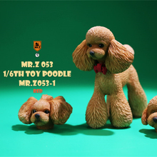 Mr.Z Studio 1:6 Cute Toy Poodle Dog Pet Figure Canidae Animal Model Toys Collector Gift Simulation Teddy Desk Decoration Mini