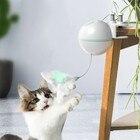 Cat Exercise Trainin...