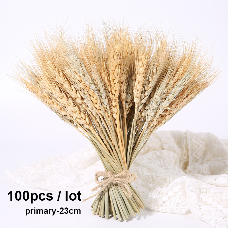 100pcs-23cm-primary