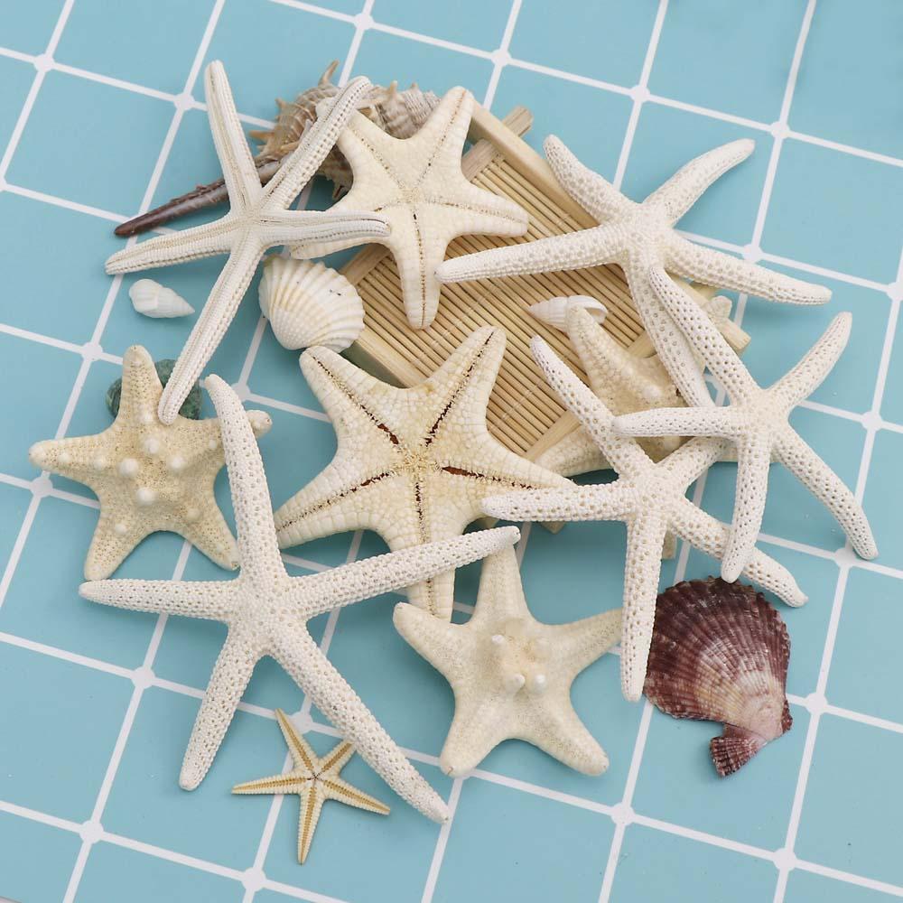 5~7cm 1-6Pcs White Starfish Craft Decoration Natural Finger Sea Star Wedding Decor Seashells Seafish Party Beige Seastar Crafts