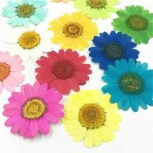 12 шт легкий прессованный высушенный органический натуральный цветок эпоксидная смола для ногтей DIY Украшение для телефона