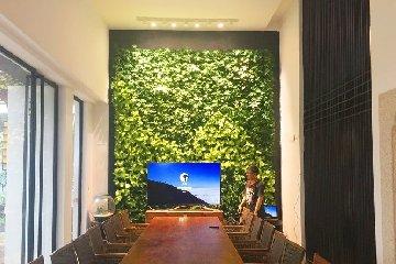 【宁波植物墙】园林公司会议室内绿植墙