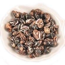 20 pçs preto natural listra espiral concha conchas para fazer jóias artesanal diy artesanato conchas casa praia decoração um buraco tr0370