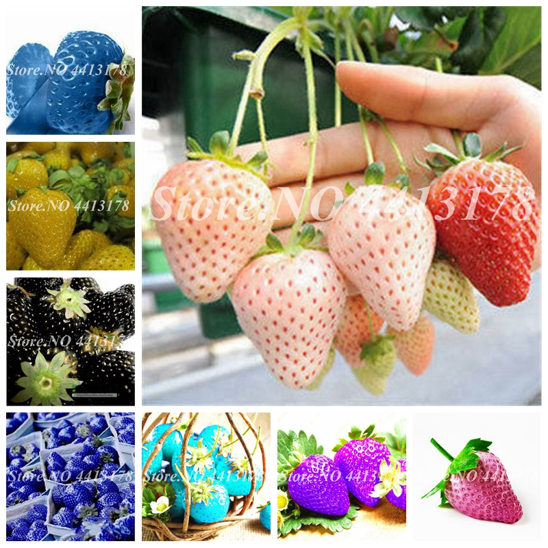 Bonsai Plants 300pcs/ Bag Colorful Strawberry Rare Giant Rainbow Juicy Potted Fruit Planta For Home Garden Flower Pot Planter