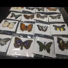 1 pces/espécimes de borboleta bonitos reais naturais para hobbies moldura de fotos diy ou adesivo de parede de casa (envios aleatórios)