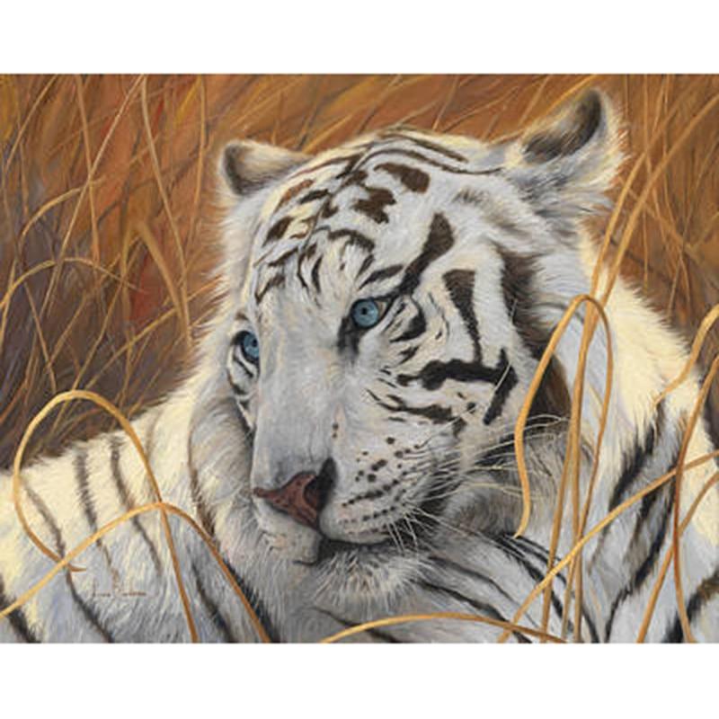 portrait-white-tiger-1-lucie-bilodeau