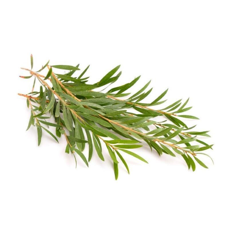 AKARZ famoso marchio tea tree olio essenziale estratti vegetali puri naturali pelle organica massaggio corpo cura olio dell'albero del tè 2