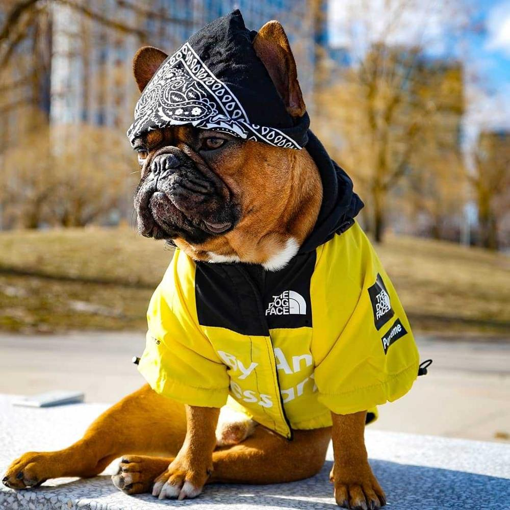 Dog Winter Clothes Windproof…