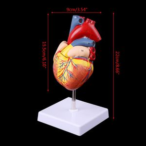 Image 2 - Disassembled Anatomical Human Heart Model Anatomy Medical Teaching Tool