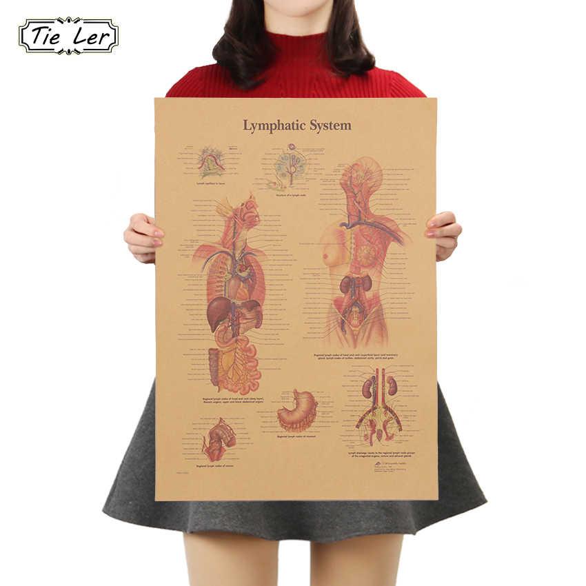 AMARRAR LER O Esqueleto do Corpo da Estrutura Do Sistema Nervoso 42x30cm Retro Kraft Papel Poster Bar Decoração Da Casa Adesivo de Parede