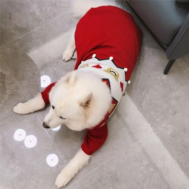 big dogs sweater winter (11)