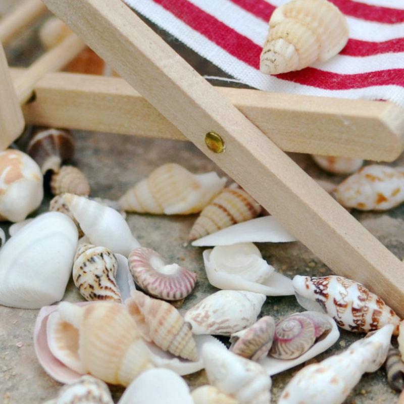 Small 40Pcs Beach Mixed Sea Shell Real Sea Shell Mix Sea Shell Starfishes Shells Craft SeaShell Aquarium Decal Decor Crafts