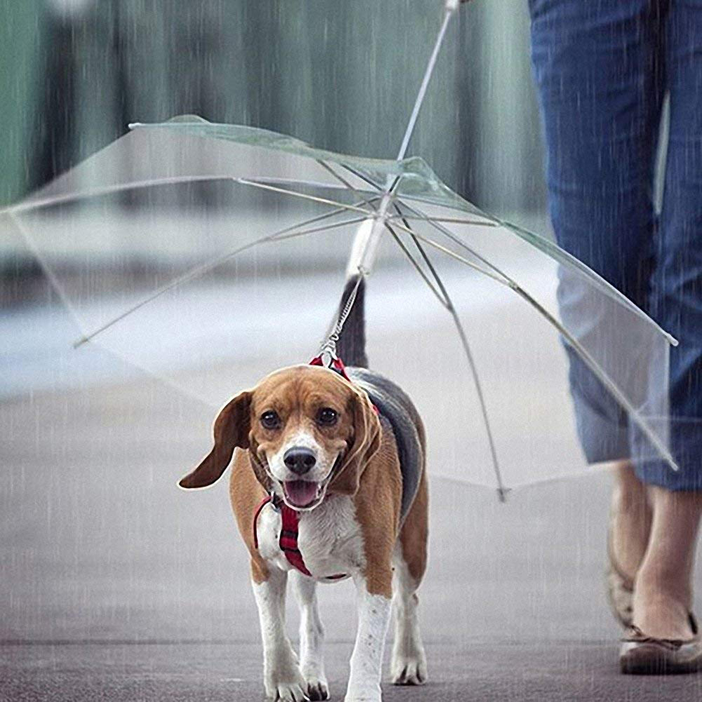 Pet-Dog-Umbrella-Hyena-Reverse-Umbrella-Transparent-Keep-Dry-Umbrella-Anti-Rain-Poncho-Waterproof-pet-products