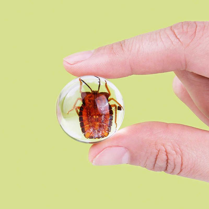 Pendidikan Siswa Nyata Serangga Spesimen Clear Resin Amber Pendidikan Anak Sekolah Pengajaran Dekorasi Rumah Koleksi