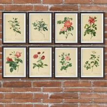 Póster botánico Vintage flor planta de pared imágenes Diagrama de vegetación antigua ilustración cuadro sobre lienzo para pared para dormitorio