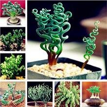 Продаются со скидкой! 100 шт. спиральная трава, суккулентное растение, сделай сам, трава бонсай, садовые горшки, экзотические Семейные растения, декоративная Весенняя трава