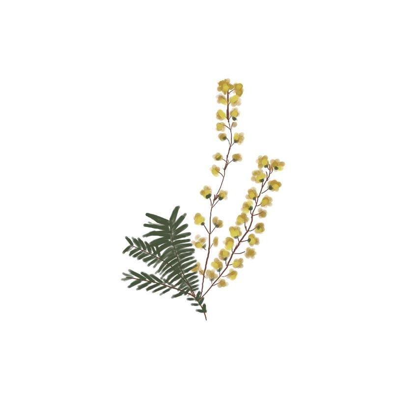 AKARZ marca Famosa aromaterapia naturale cumino olio essenziale Per aiutare in dolore muscolare Risolvere un mal di testa di cumino olio 2