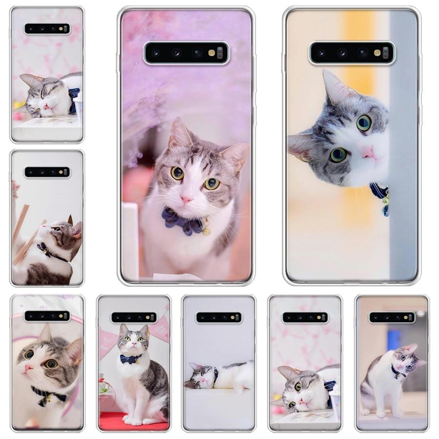Tier pet nette inländischen kurzhaarige katze Telefon Fall Für Samsung Galaxy A71 A70 A51 A50 A41 A40 A30 a21 A10 A01 A90 A20S A20E A1