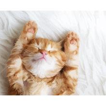 Животные кошка настенные картины diy картина по номерам рисовать