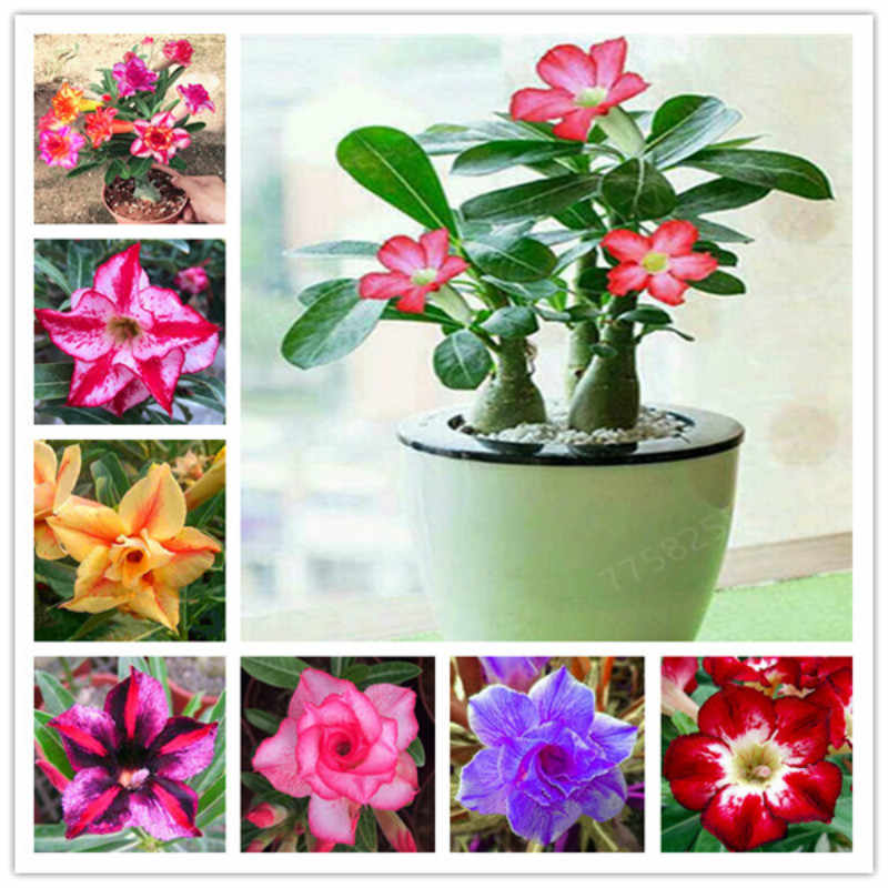 Simulazione di piante artificiali bonsai fiori falso In Vaso regalo, 1 pz/lotto Desert Rose Bonsai Ornamentali Piante Adenium Obesum