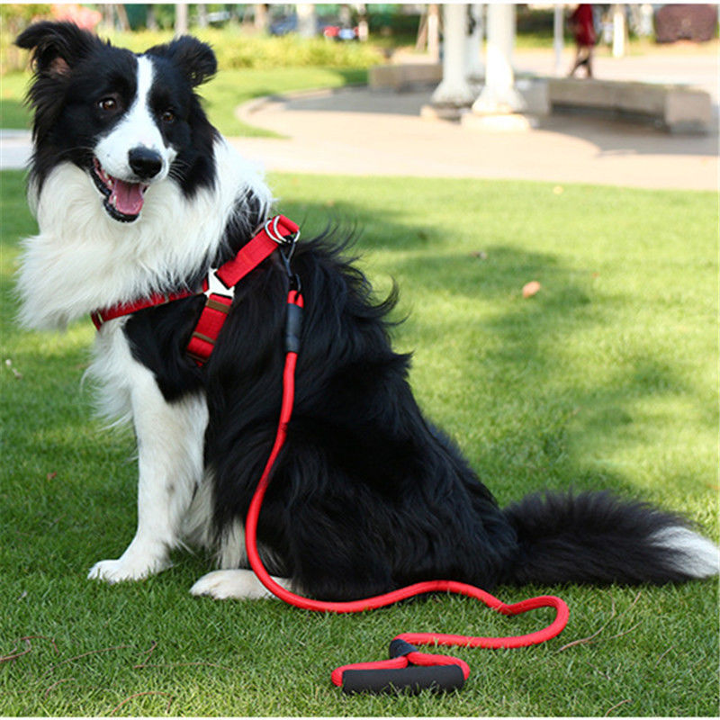 Dog Hand Holding Rope Dog Chain Pet's Chest-back Small And Medium-sized Dogs Dog Rope Chain Neck Ring Teddy Bull Golden Retrieve
