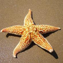 2 шт., сушеные звезды, рыбы, морские звезды, пляж, ремесло, свадьба, вечеринка, украшение для дома, подарок, ремесла, морские рыбы, Похожие с природными звездами