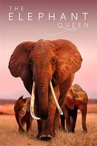 大象女王[HD+BD]