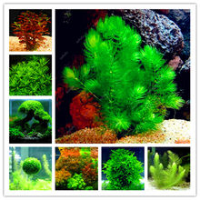 Sale!500 Pcs Aquarium Grass Bonsai Water Aquatic Plant Bonsai Family For Decorate The Aquarium Green Water Grass Decor Landscape(China)