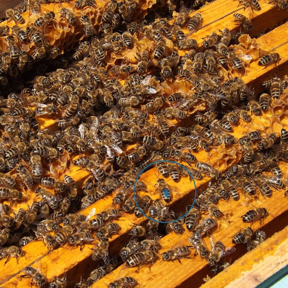 Beekeepers Marker Pen Queen Bee Marking Beekeeping Supplies Accessories Too I5K2