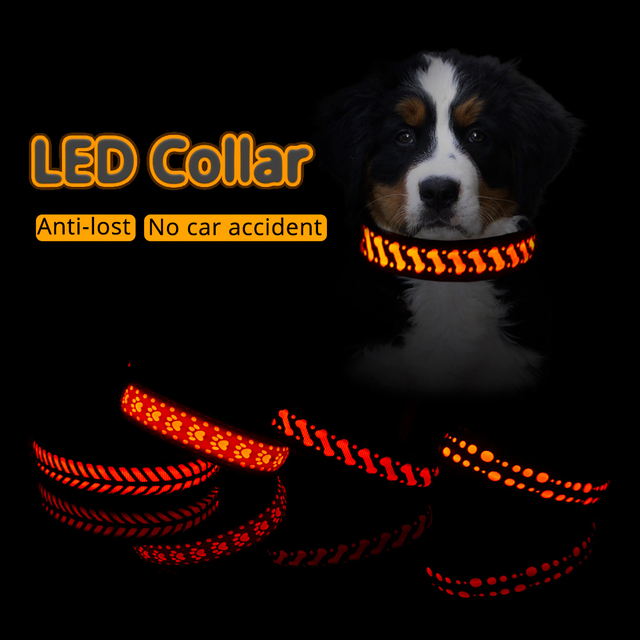 "Luminous Flashing Night Time Walking Pup Collar "" Pets Alpha Says, "" Safety First! ""   1"