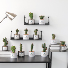 Simulation Plant Decoration Green Plant Indoor Potted Cactus Wrought Iron Ornaments Fake Grass Bonsai succulents plant spring grass plant succulents plant grass diy bonsai potted garden home exotic plant ornamental bonsai