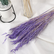 A Bunch Real Wheat Natural Dried Flowers Wedding Party Decoration Craft Scrapbook Diy Home Decoration Wheat Bouquet Photo Props