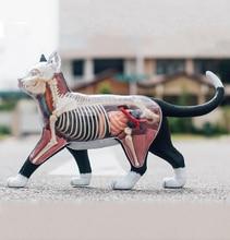 4D Vision Dissected แมวตลก ANATOMY Medical Skull Skeleton กายวิภาคชุดวิทยาศาสตร์การศึกษาของเล่นสำหรับเด็ก