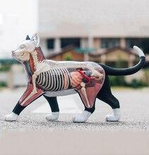 4D Vision rozcięty kot zabawny MODEL anatomiczny medyczny czaszka Model anatomiczny nauka edukacyjne zabawki dla dzieci