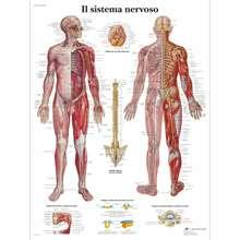 Anatomia patologia anatômica poster il sistema nervoso clássico quadros em tela vintage posters de parede adesivos decoração para casa presente
