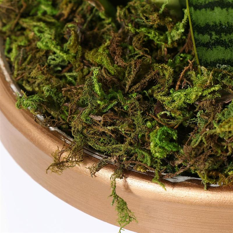 3 Packs Artificial Moss Lichen Simulation Fake Green Plants for Home Garden 60g