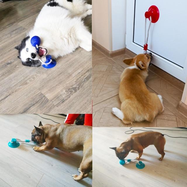Brinquedos para cães de estimação filhote de cachorro interativo ventosa empurrar tpr bola brinquedos molar mordida brinquedo cordas elásticas limpeza do dente do cão suprimentos de mastigação 4