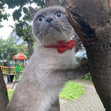 Ошейник для домашних животных точка Серия галстук бабочка кота