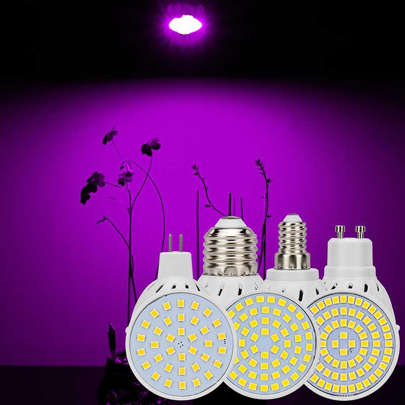 LED צמח זרקור הנורה AC110V 220V GU10 MR16 E27 E14 Led 36 60 80 נוריות SMD לגדול דיפוזיה אור לצמחים פרח ירקות